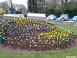 Ulster in Bloom 2011 (6)